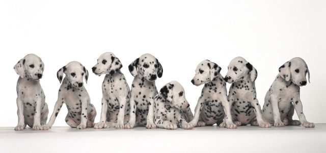 102 Dalmatians: Puppies to the Rescue – PlayStation
