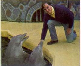 Dolphin, Matthew Hubbard picture